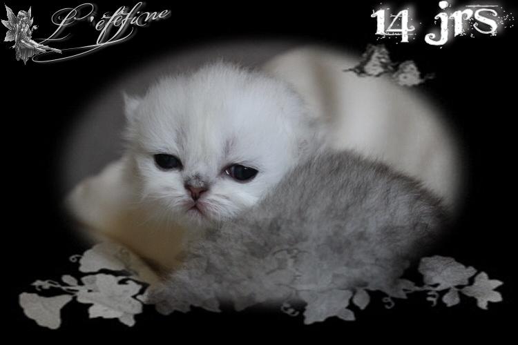 1 laynci 14 jrs