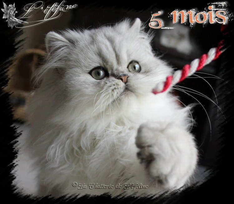 12 melvin 4 mois 3 semaines