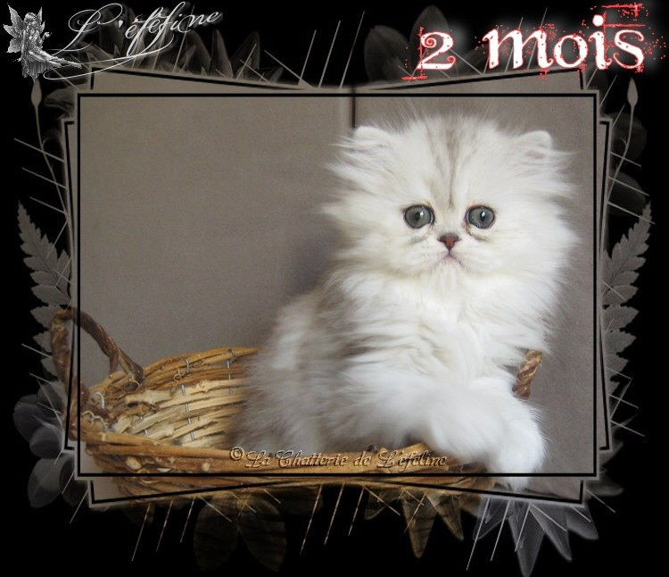 5 joelyne 2 mois