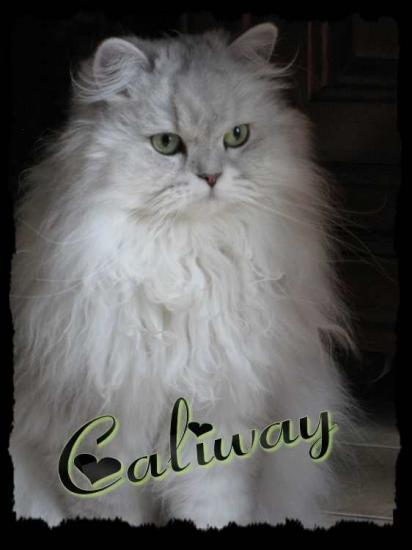 caliway-1.jpg