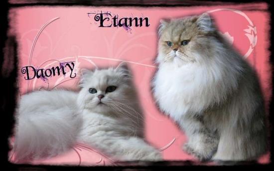 daomy-etann-2012-1.jpg