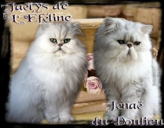 Jaëlys&Jénaë 2017