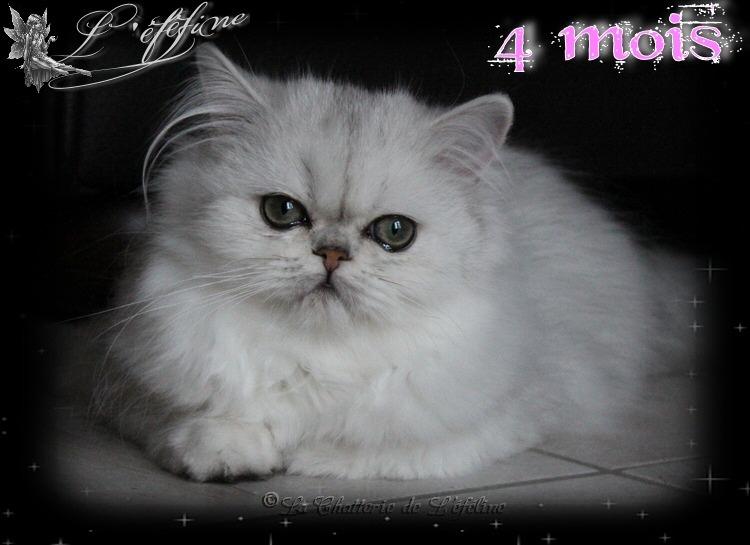 Maeline 4 mois 1