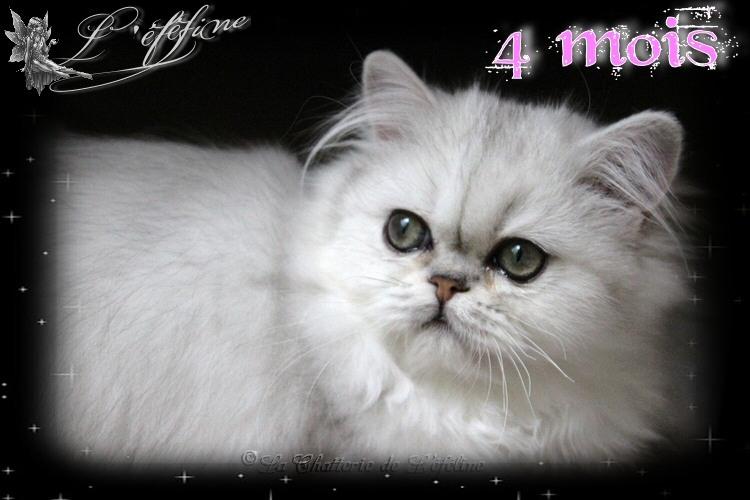 Maeline 4 mois