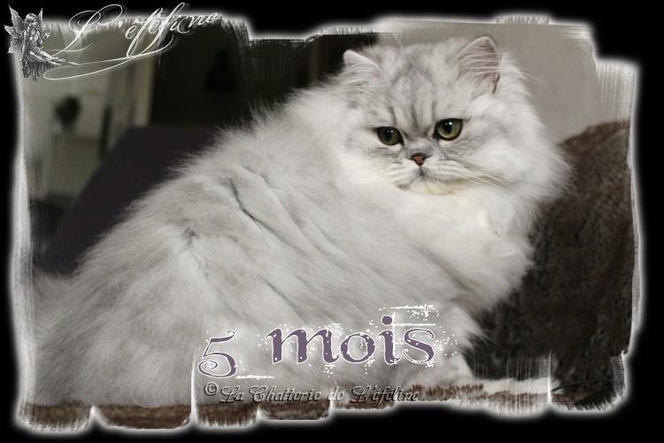 Maëllie 5 mois
